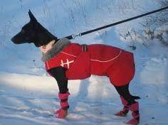 Kuvahaun tulos haulle kickspark koiran kanssa