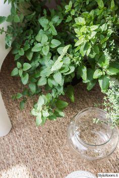 Rivitalopiha - Sisustuskuva jäseneltä jaana_k - StyleRoom. Parsley, Celery, Herbs, Vegetables, Plants, Herb, Vegetable Recipes, Plant, Veggies