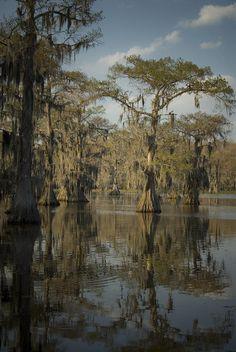 (TEXAS) Bayou - Cado, Texas. As part of my East Texas adventure.