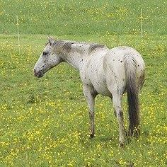 Equine Trader Vetpro Photo of the Week entrant - Bella Campbell