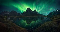 The Green Octopus by Max Rive on 500px