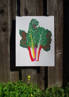 Rainbow Chard from Jen Kindell for $125.00 Beautiful Artwork, Cool Artwork, Amazing Artwork, Rainbow Chard, Framed Prints, Poster Prints, Artwork Prints, Posters, You Draw