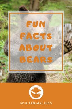 What makes a spirit animal a spirit animal? The traits and characteristics of the animal determine what that animal means. Click through to find out some unique facts about bears. #bear #spiritanimals #animaltotems Find Your Spirit Animal, Bear Spirit Animal, Unique Facts, Fun Facts, Black Bear, Brown Bear, Facts About Bears, Cinnamon Bears, Running Horses