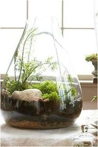 Mini garden, great for apartments or just to lighten up a room