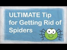 How to Get Rid of Spiders in the House: 11 Steps (with Pictures)
