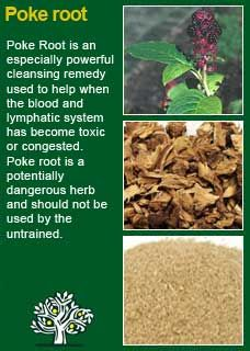 Poke Root -  Magickal uses include finding lost objects and breaking hexes and curses. Carry to increase courage. Add an infusion of poke root to bath water to break hexes.The Berries of the plant are a bright red and can be used in making magical ink
