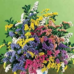 *Soiree Mix Statice 100 Seeds Superb fresh or dried! Bright blooms in 7 colors glow all summer on 2-foot plants!