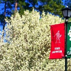 See sparkling waterfalls, shimmering fountains, babbling brooks & lovely gazebos at Guido Gardens in Metter, Georgia! Stuff To Do, Things To Do, Beautiful Prayers, Waterfalls, Christmas Lights, Georgia, Middle, Gardens, Vacation