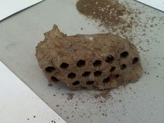 1000 Images About Wasp Nests Papier M 226 Ch 233 Inspiration On