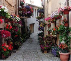 Vicoli di Spello/Spello alleys - Umbria