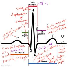 Anatomy question - aortic arches derivatives - YouTube | USMLE style ...