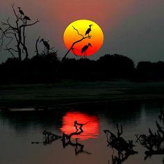 ZAMBIA SUNSET