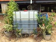 Our Grey Water System – Recycle, Reuse & Grow Trees. An integrated greywater system to feed our fruit trees in Thailand.