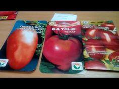 Обзор любимых сортов томатов!!! - YouTube