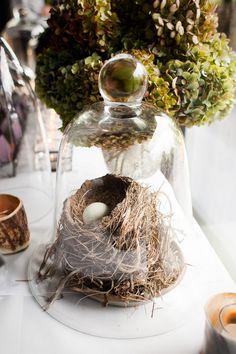 bell jar cloche over bird's nest - simple natural elegance