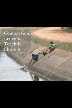 Compassion :)