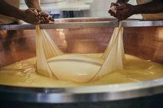 Einer von 2 Kesseln, die mit der Milch der Vacce Rosse gefüllt sind. Die reiche Milch der roten Kühe (Vacche Rosse). Parmigiano Reggiano von Grana d'Oro aus der Emilia Romagna.