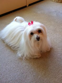 This is the dog I dreamed about owning as a child...still adorable