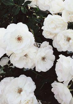 spring blooms // sarah sherman samuel