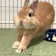 This bunny is so cute! Super Cute Animals, Cute Funny Animals, Cute Baby Animals, Animals And Pets, Cute Cats, Fruit Animals, Cute Baby Bunnies, Funny Bunnies, Funny Bunny Videos