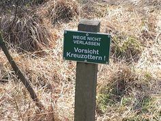 Kreuzotter lüneburger Heide – Google-Suche Heide Park, Google, Outdoor Decor, Home Decor, Searching, Destinations, Tips, Decoration Home, Room Decor