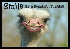 Club Giggles Top 5 weird animals and stuff - Home of Funny Pictures, Funny Top Lists, Hysterical Gifs, Wild Videos and Random Fun Section Funny Animal Pictures, Funny Photos, Funny Animals, Cute Animals, Funniest Animals, Pictures Images, Smiling Animals, Animal Fun, Majestic Animals