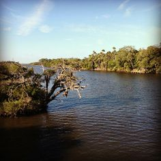 Located near the confluence of the Tomoka and Halifax Rivers, Tomoka State Park offers scenic oaks and camping where early Native Americans once lived off the fish-filled lagoons.