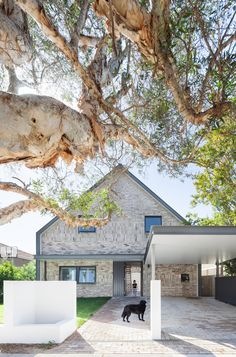 House Maher - Tribe Studio Architects To achieve this marvelous look you need to first grow yourself a two hundred year old tree.