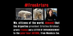 PLEASE SIGN AND HELP A POLAR BEAR!! Argentina president Cristina Kirchner: Grants freedom and a LETTER OF ENFRANCHISEMENT to the polar bear ARTURO.