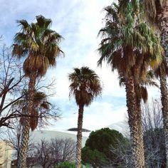 Derrière les palmiers le stade. #Marseille #Vélodrome #OM