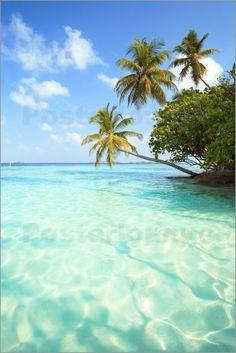 Matteo Colombo - Türkises Meer und Palmen, Malediven
