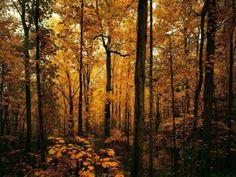 Calendário de estreias 2013 – Fall Season | Temporadas - VEJA.com