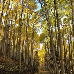 Just follow the yellow road. #LockettMeadow #falldays #SundayFunday
