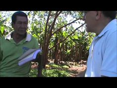 Aché New Testament Testimonies - Ache leaders in Paraguay speak about the benefits of having the whole New Testament in their language. They speak about confidence, cultural strength, and spiritual growth.