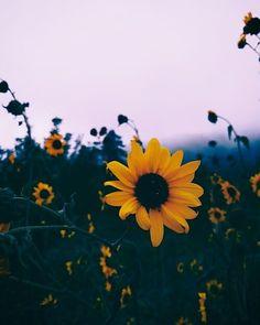64 Ideas for wallpaper flowers girassol Tumblr Backgrounds, Aesthetic Backgrounds, Aesthetic Iphone Wallpaper, Aesthetic Wallpapers, Wallpaper Backgrounds, Crazy Backgrounds, Bts Wallpaper, Travel Photographie, Sunflower Wallpaper