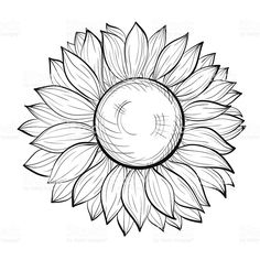 beautiful black and white sunflower isolated on white background royalty-free stock vector art