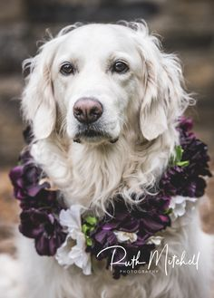 Dog with flower collar with wedding rings attached Pre Wedding Photoshoot, Wedding Shoot, Our Wedding, Destination Wedding, Wedding Rings, Getting Married Abroad, Wedding Fair, Days Of Our Lives, North Yorkshire