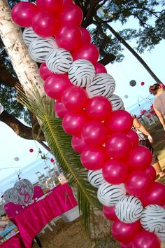 cheetah print graduation decorations | DSC_1192 Zebra Print Balloons with Magenta Pearl Decorations Birthday ...