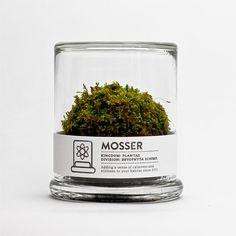 Moss terranium