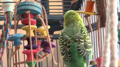 Disco, Are You a Sweet Baby Bird?