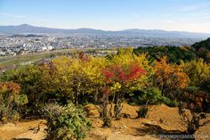 Arashiyama (Kyoto) in autumn is SO beautiful! :3
