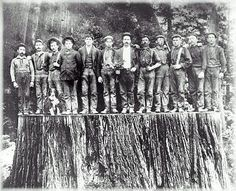 Twelve men stood shoulder-to-shoulder to span a redwood stump in this historic photo from Pacific Lumber Co. (AP)