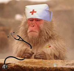 Συνελήφθη γιατρός μαϊμού