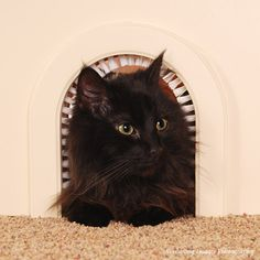 lemme just find a piece of wood shaped like this, hang some heavy plastic in it, and we've got a cat door to the basement!