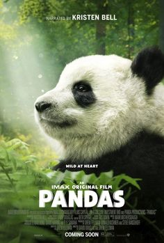 "IMAX® original film ""Pandas"" is a breathtaking documentary adventure for the whole family!"