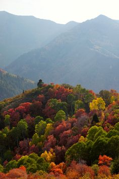 Smokey Mountains, NC colorful fall trees scenery landscape
