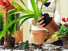 Toužíte po parapetech plných živých rostlin, ale máte okna bytu orientovaná na sever, a tak všechny vaše pěstitelské pokusy dosud ...