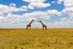 Maasai Mara, Rift Valley,Kenya (by Niko Saunio)