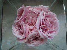 {rosas de Santa Teresinha