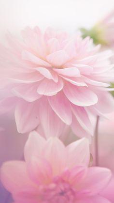 Collection Rose de bracelet en pierre --> Visitez la boutique de bijoux en pierre naturelle --> zemaria.fr Frühling Wallpaper, Flower Phone Wallpaper, Wallpaper Backgrounds, Pretty Flowers, Pink Flowers, Spring Photography, Photography Flowers, Flower Aesthetic, Flower Backgrounds